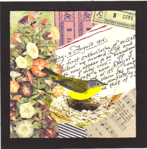 7 X 7 collage